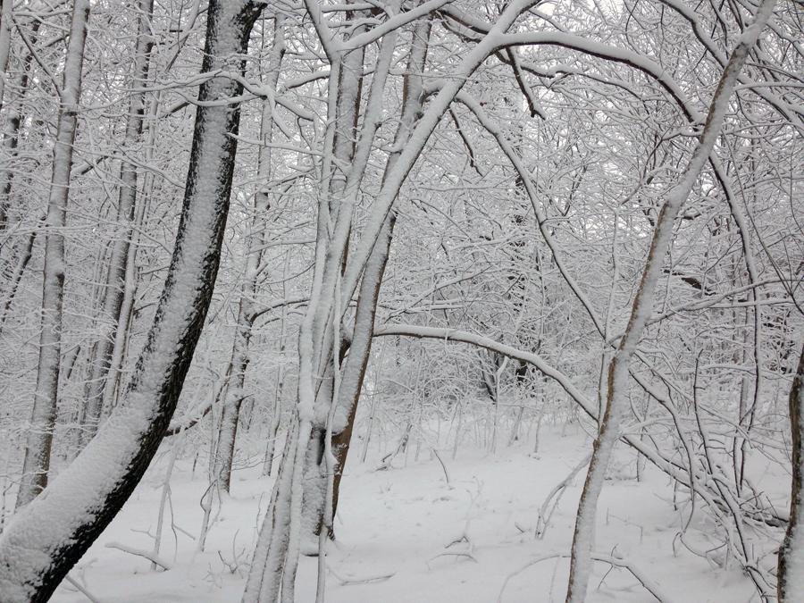 SnowDayAL1b
